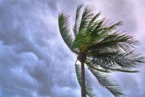 Windy Palm Tree