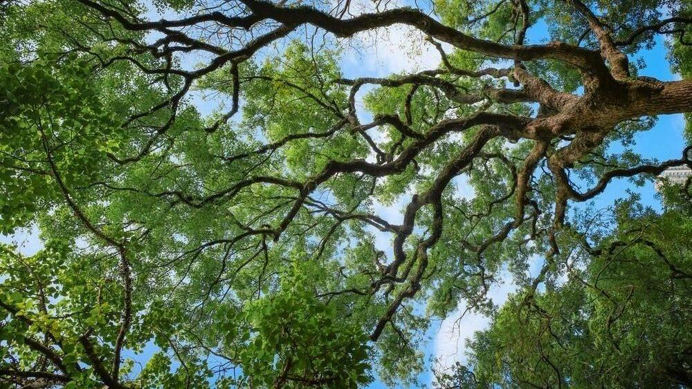 Tree Canopy Ground to Sky