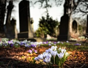 Cemetery Crocus