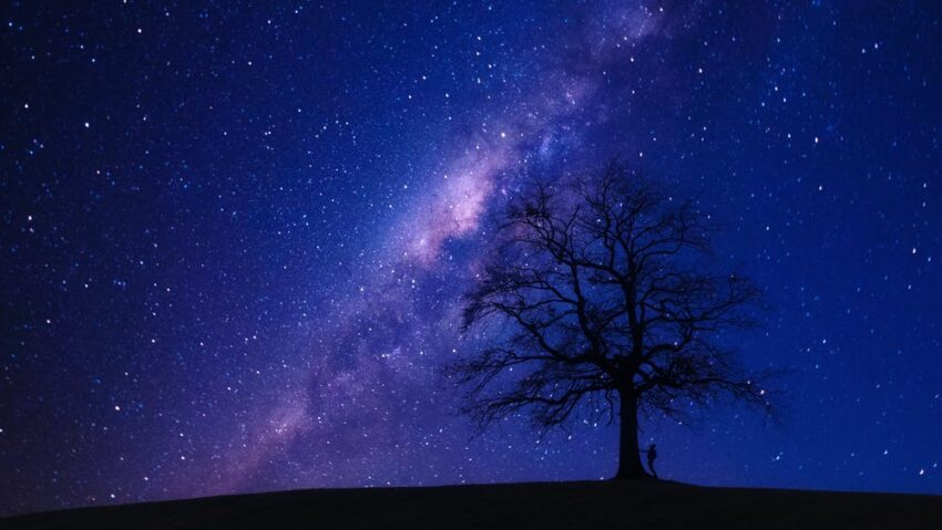 Tree under night sky